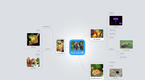 Mind Map: Reino animal