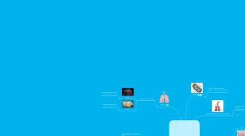 Mind Map: Respiración, Intercambio de Gases