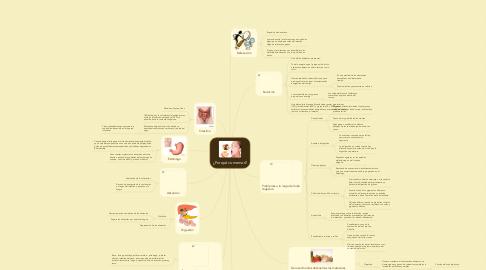 Mind Map: ¿Porqué comemos?