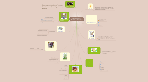 Mind Map: EVALUACION DE LOS MATERIALES DIDACTICOS