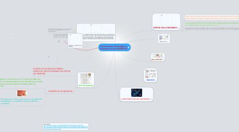 Mind Map: Características Morfológicas y fisiológicas de las NEURONAS