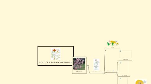 Mind Map: CICLO DE LAS ANGIOSPERMAS