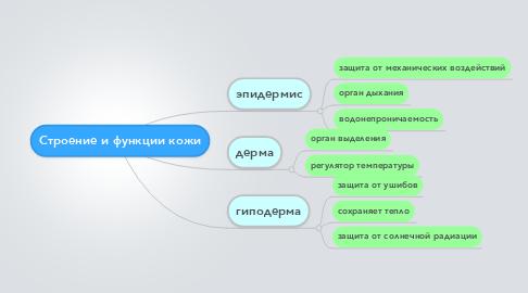 Mind Map: Строение и функции кожи