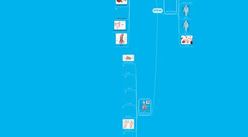 Mind Map: SISTEMA