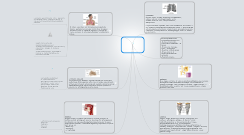 Mind Map: Intercambio gaseoso