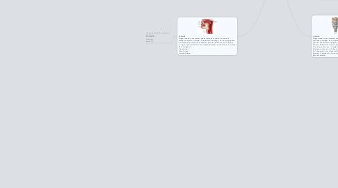 Mind Map: Intercambio gaseoso