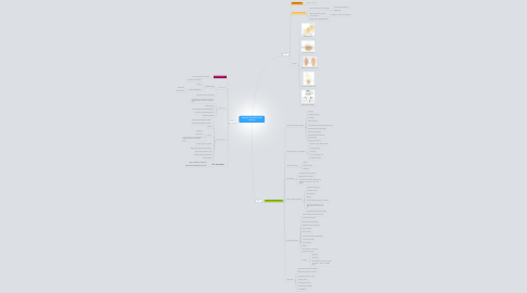 Mind Map: She says she'll lose her job session 2