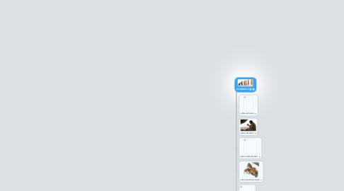 Mind Map: HOMÍNIDOS