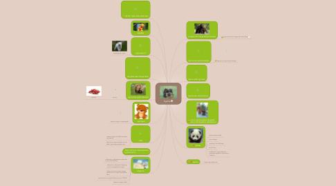 Mind Map: bjørne
