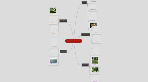 Mind Map: VARIEDADES DE PLANTAS