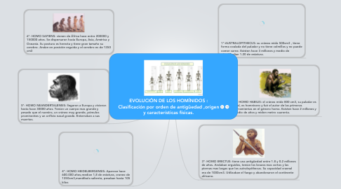 Mind Map: EVOLUCIÓN DE LOS HOMÍNIDOS : Clasificación por orden de antigüedad ,origen y características físicas.