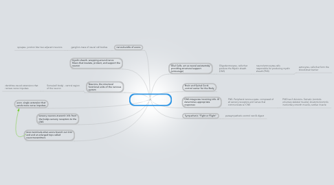 Mind Map: Nervous System: Basic Structure and Function