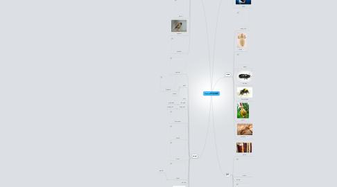 Mind Map: Creature 花鸟鱼虫禽兽