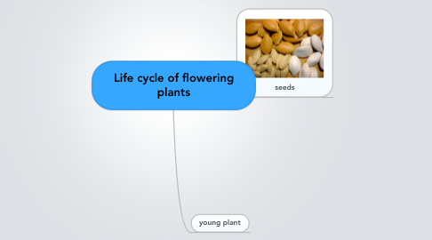 Mind Map: Life cycle of flowering plants