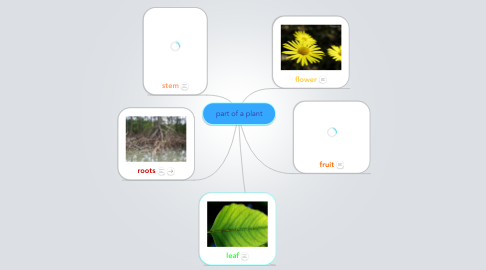 Mind Map: part of a plant