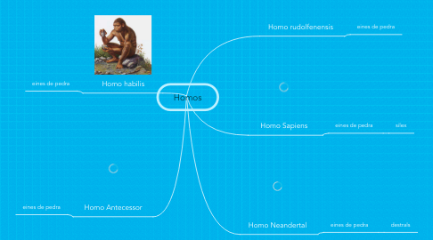 Mind Map: Homos