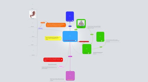 Mind Map: Sistema digestivo humano