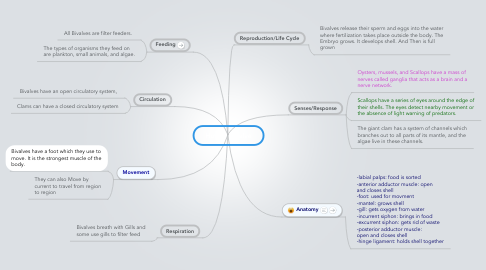 Mind Map: Hour 1 Bivalve