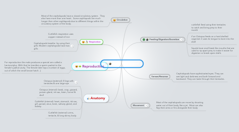 Mind Map: Hour 1 Cephalopod