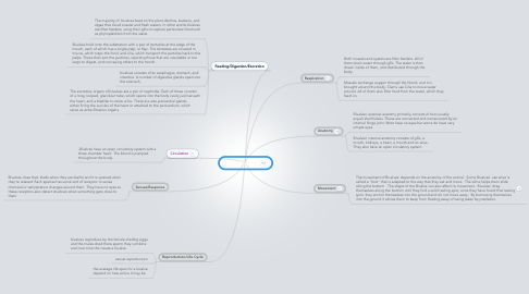 Mind Map: Hour 2 Bivalve