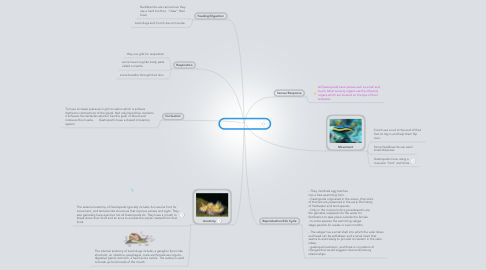 Mind Map: Hour 1 Gastropod