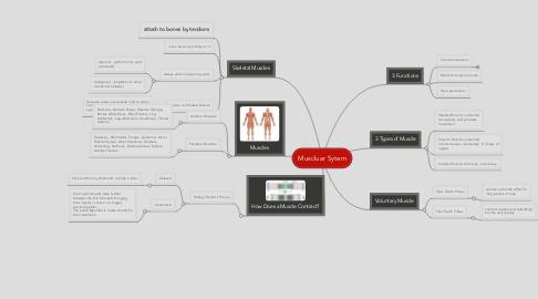Mind Map: Muscluar Sytem