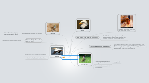 Mind Map: 7J Beaks of Birds