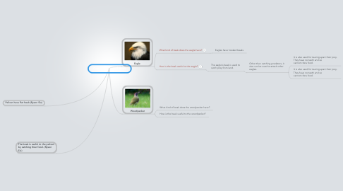 Mind Map: Copy of Beaks of Birds