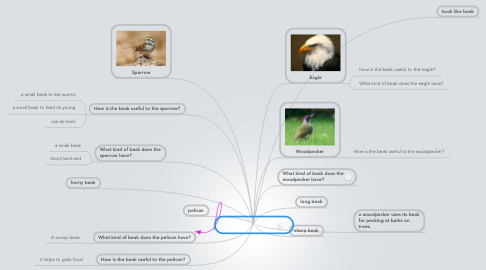 Mind Map: 6B Beaks of Birds