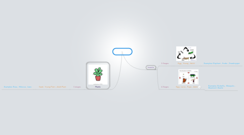 Mind Map: Life Cycle