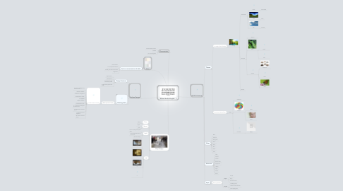 Mind Map: Maison Martin Margiela