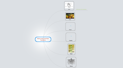 Mind Map: Plant parts and their functions