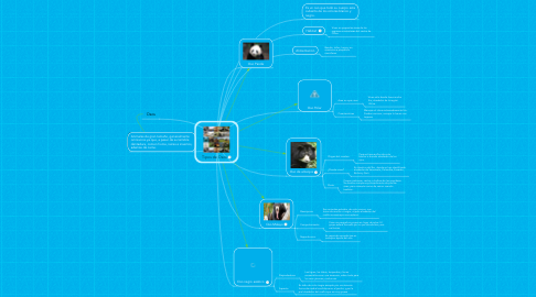 Mind Map: Tipos de Osos