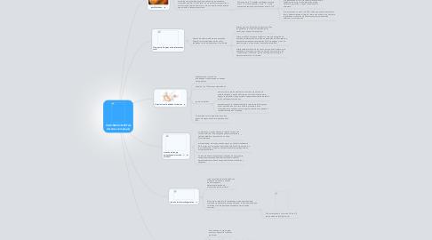 Mind Map: VALORACION FETAL (tecnicas complejas)