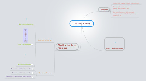 Mind Map: LAS NEURONAS