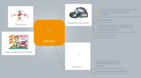 Mind Map: HIGADO
