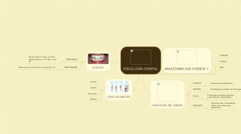 Mind Map: FISIOLOGÍA DENTAL