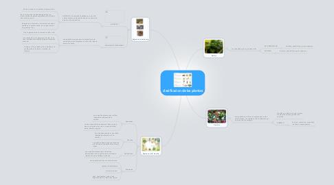 Mind Map: clasificacion de las plantas