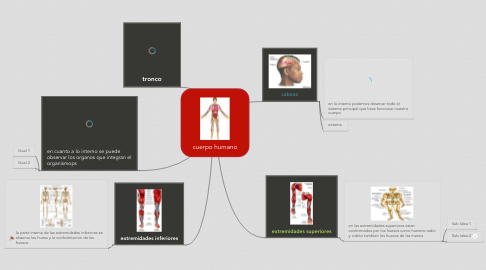Mind Map: cuerpo humano