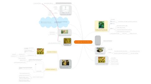 Mind Map: microbiologia de los alimentos