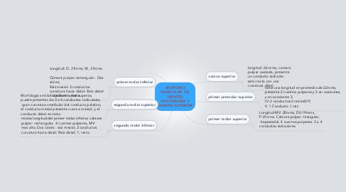 Mind Map: ANATOMIA RADICULAR  DE DIENTES POSTERIORES Y CANINO SUPERIOR