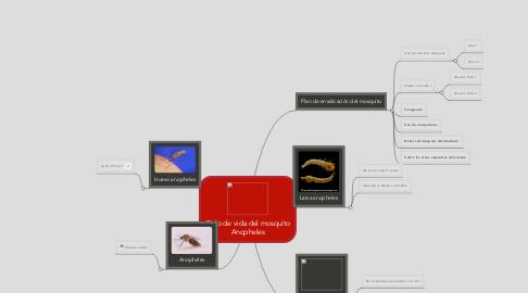 Mind Map: Ciclo de vida del mosquito Anopheles