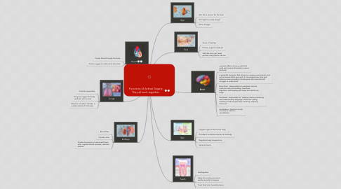 Mind Map: Functions of Animal Organs - They all work together...