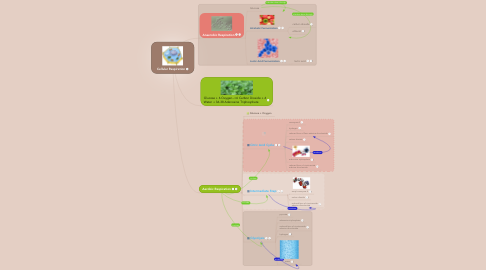 Mind Map: Cellular Respiration