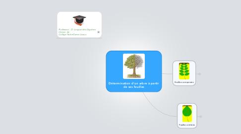 Mind Map: Détermination d'un arbre à partir de ses feuilles