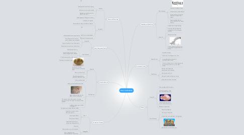 Mind Map: River Civilizations