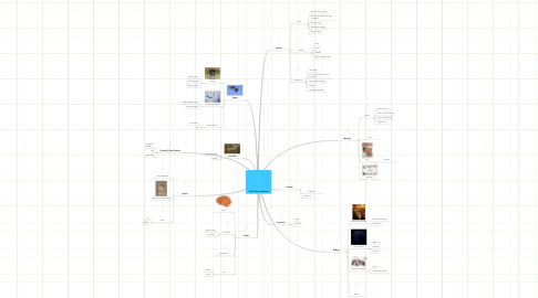 Mind Map: The Church of Moose