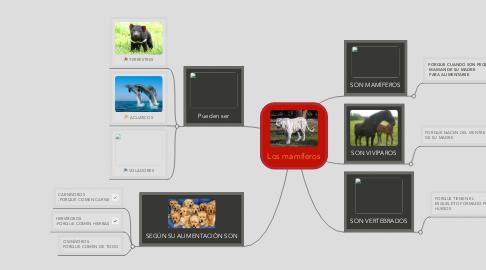 Mind Map: Los mamíferos