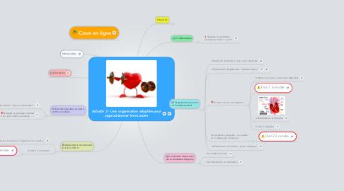 Mind Map: Activité 3 - Une organisation adaptée pour approvisionner les muscles