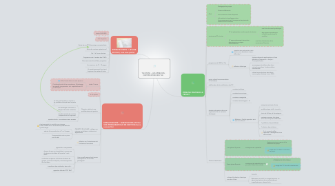 Mind Map: TLE STMG -- LES EPREUVES CERTIFICATIVES EN TLE